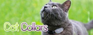cat-collars-1-300x115 Cat Collars