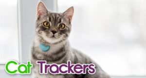 cat-trackers-300x162 Cat Trackers