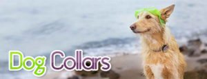 dog-collars-1-300x115 Dog Collars