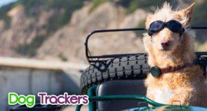 dog-trackers-300x162 Dog Trackers