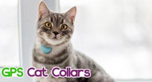 gps-cat-collars-300x162 GPS Cat Collars