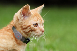 loc8tor-pet-gps-for-cats loc8tor pet gps for cats