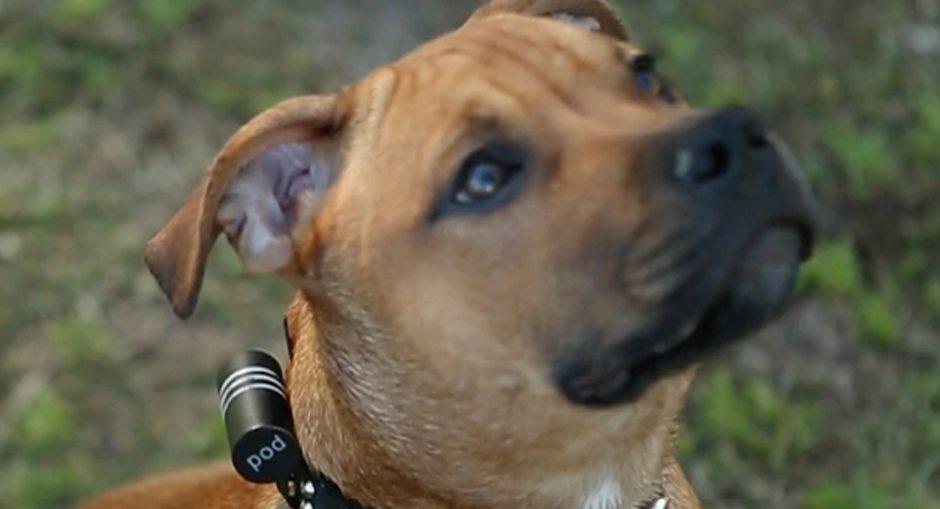 Pod 2 Pet Tracker Review