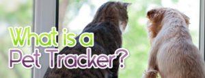 what-is-a-pet-tracker-1-300x115 What Is A Pet Tracker