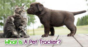 what-is-a-pet-tracker-2-300x162 What Is A Pet Tracker?