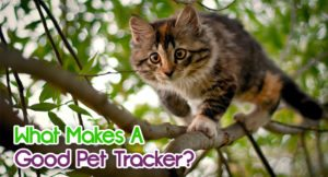 what-makes-a-good-pet-tracker-300x162 What Makes A Good Pet Tracker?