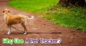 why-use-a-pet-tracker-1-300x162 Why Use A Pet Tracker?