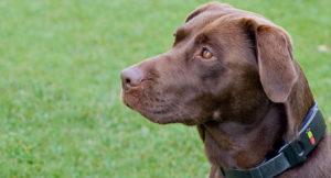 dog-tracker-plus-1-300x162 dog tracker plus
