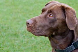 Dog Tracker Plus