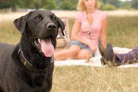 dog-tracker-plus dog tracker plus