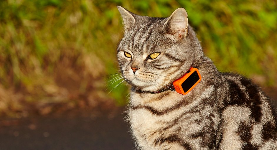 G-Paws Pet Tracker Review