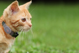Loc8tor Pet GPS For Cats
