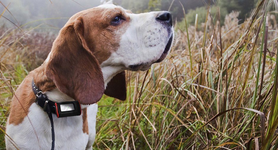 Loc8tor Pet GPS For Dogs Review
