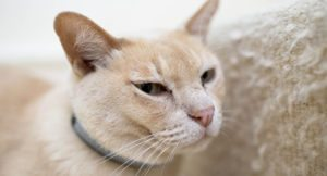 pawtrack-gps-cat-tracking-collar-300x162 Pawtrack GPS Cat Tracking Collar