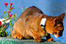 smartcat-petfinder smartcat petfinder