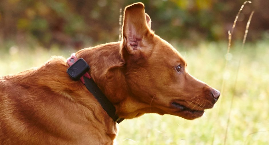 G-Paws 2 Pet Tracker Review