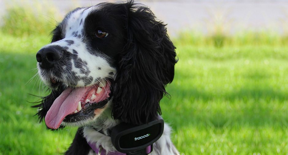 Tracca Dog Tracker Review