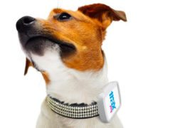 Trax Pet GPS