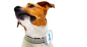 trax-pet-gps-2-300x162 Trax Pet GPS