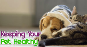 keeping-your-pet-healthy-300x162 Keeping Your Pet Healthy