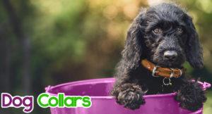 dog-collars-300x162 Dog Collars