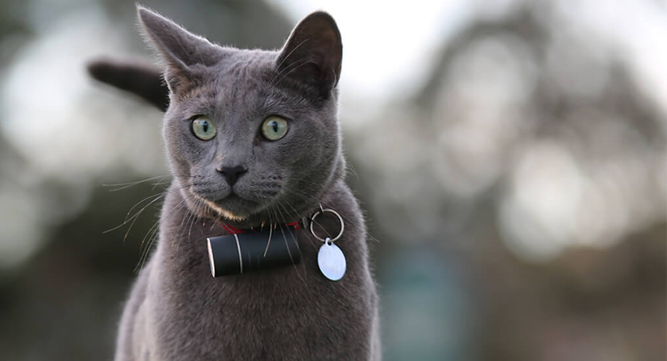 Pod 3 GPS Pet Tracker Review