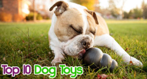top-ten-dog-toys-300x162 Top Ten Dog Toys