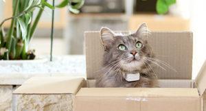 miaufinder-2-cat-tracker-300x162 Miaufinder Tracker 2 Review