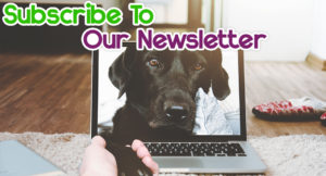 pet-tracker-reviews-newsletter-1-300x162 Pet Tracker Reviews Newsletter
